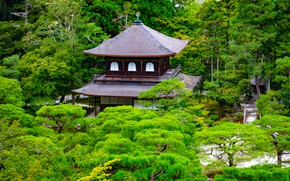 Picture greens, trees, branches, Park, stones, Japan, pagoda, Kyoto, the bushes