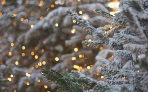 Picture branches, glare, spruce, tree, bokeh