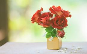 Picture roses, bouquet, mini