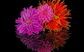 Picture reflection, bouquet, petals