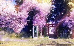 Picture spring, Sakura, phone booth, torii