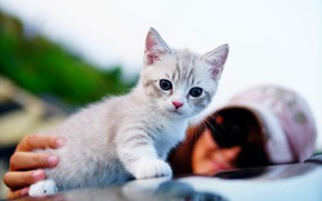 Picture eyes, background, cat, baby