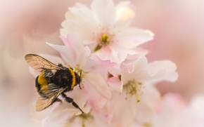 Wallpaper flower, nature, petals, garden, insect, bumblebee