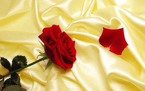 Picture rose, petal, fabric, red, yellow, Atlas