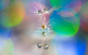 Picture water, drops, macro, nature, fantasy, beauty, plants, Association