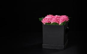 Picture box, roses, bouquet, pink, box, flowers, romantic, Maxim Denisenko