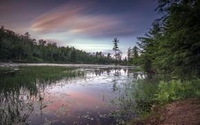 Picture forest, landscape, sunset, river
