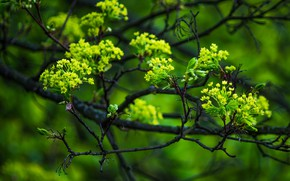 Picture macro, branches, tree, spring, maple, flowering