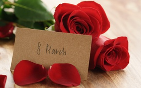 Picture red roses, roses, petals, March 8, romantic, gift, bouquet, red