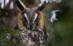 Picture forest, branches, owl, bokeh