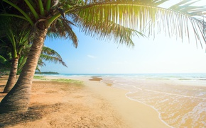 Picture the sun, tropical, summer, sea, sand, shore, sand, sea, beach, palms, beach, island, paradise, palm ...