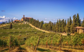 Wallpaper clouds, the sky, the sun, vineyard, greens, Tuscany, Castello Banfi, the bushes, trees, home, hills, ...