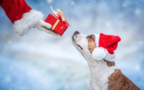 Picture gift, dog, New Year, Christmas, Christmas, dog, 2018, Merry Christmas, Xmas, funny, cute, decoration, santa …