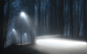 Picture road, light, night, fog