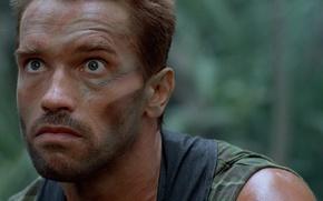 Wallpaper cinema, The Beast, soldier, Predator, jungle, man, movie, face, film, Arnold Schwarzenegger, strong, Dutch, muscular, ...