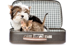 Picture kitty, dog, suitcase, kitten, Dogs, Terrier