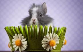Picture flowers, background, rabbit, basket