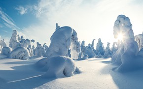 Picture winter, snow, trees, panorama, the snow, Sunny day, Finland, Finland, In Kuusamo, Kuusamo, Kuntivaara