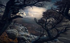 Wallpaper trees, mountains, nature, South America, Patagonia