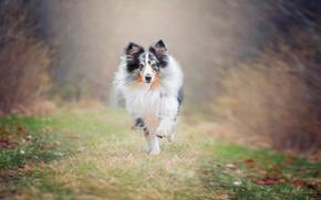 Wallpaper each, dog, running