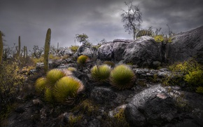 Picture the sky, clouds, nature, stones, rocks, Mexico, cacti