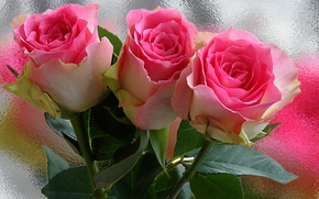 Picture drops, flowers, Rosa, tenderness, rose, roses, beauty, petals, Bud, beautiful, beautiful, gently, vintage