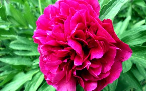 Picture spring, may, peony