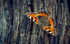 Wallpaper tree, butterfly, bark