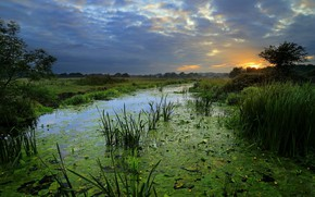 Wallpaper summer, trees, duckweed, greens, field, reed, the sky, grass, swamp, pond, clouds, sunset