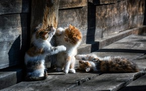 Wallpaper wood, animal, cats, cute, situation, playing, paws, fur, ears, whiskers, feline, Kittens, snouts