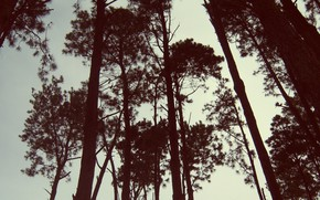 Picture the sky, trees, silhouettes