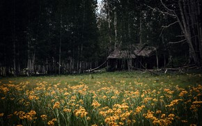 Picture field, forest, flowers, house