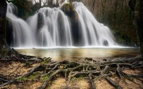 Wallpaper tree, roots, river, waterfall