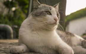 Picture cat, lies, Kota