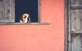 Wallpaper sadness, house, dog, window, nostalgia