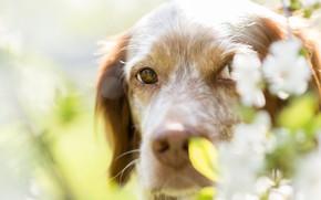 Picture look, face, flowers, portrait, dog
