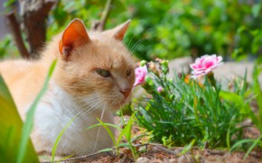 Picture Flowers, Cat, Cat