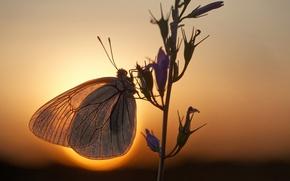 Wallpaper the sun, macro, butterfly, branch, the evening, bokeh