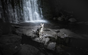 Picture river, waterfall, dog