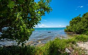 Picture sea, greens, the sky, grass, the sun, clouds, trees, shore, FL, horizon, USA, Everglades