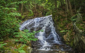 Picture forest, water, waterfall, stream