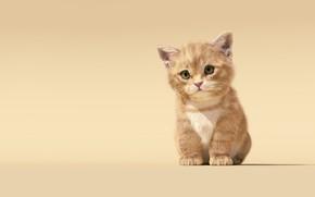 Wallpaper children's, Sanhanat Suwanwised, baby, art, kitty, Cat