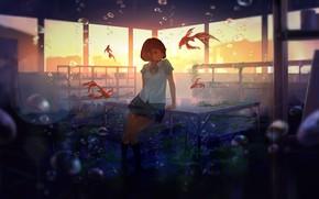 Picture fish, algae, sunset, bubbles, table, Windows, class, schoolgirl, under water
