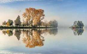 Wallpaper trees, reflection, lake, fog, balloon