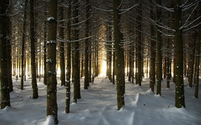 Picture winter, forest, light, snow