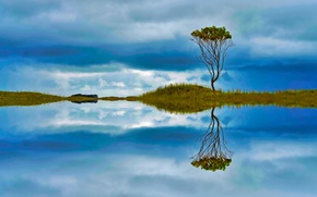 Picture the sky, reflection, tree