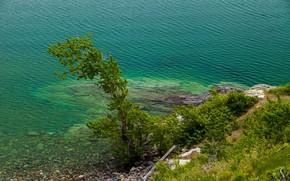 Picture lake, tree, ruffle