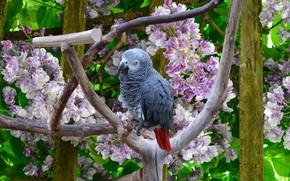 Picture Flowers, Bird, Parrot, Flowers, Bird