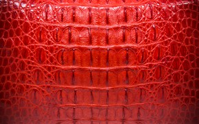 Picture red, background, leather, crocodile, red, texture, leather, crocodile