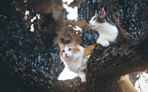 Picture cats, tree, on the tree, koteyki